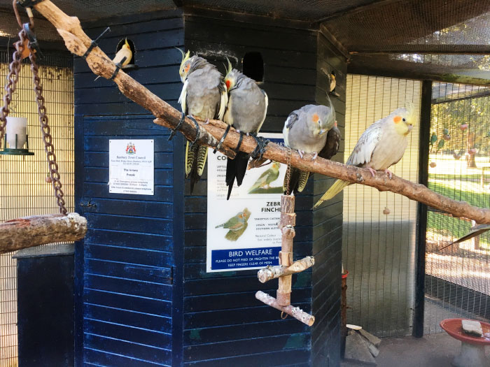 cockatiels in their aviary at people's park