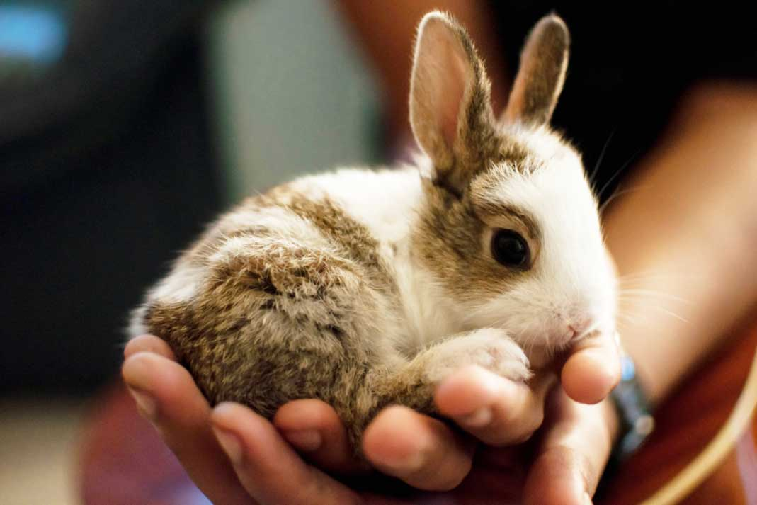 a small rabbit being held in the hand at a petting zoo
